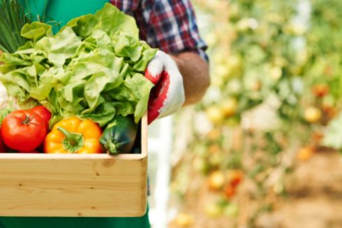 4ª Oficina da Agricultura Familiar e Pnae aborda processo de compra de produtos de agricultores familiares
